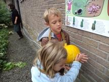 pompoenen oogsten (4)