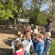 Struisvogelnest Mieke (2)